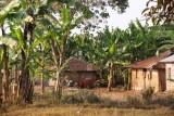 kamperen tussen de huizen in de bananenplantage