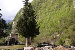 mooi groen in Georgië-550