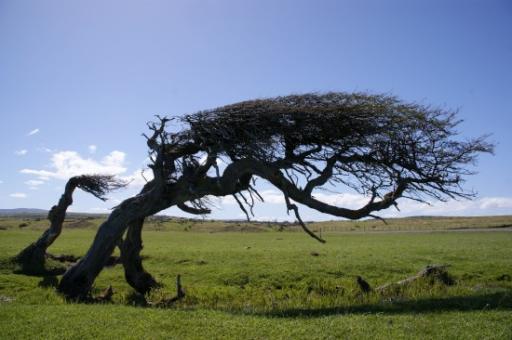 Hoe De Wind Waait Door De Bomen Foto Around The World In Many Days
