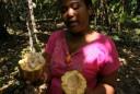de vrucht van de cacaoboom