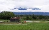 rijstveld onder de vulkaan-550