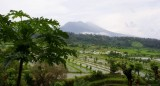 rijstvelden Bali-550