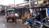 In Mataram, Lombok