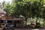 verse kokoknoot Sengigi Lombok