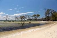 Bomen die in het water staan