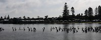 Een groep pelikanen in het water vlakbij onze eerste camping