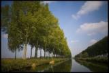 Bomenrij langs Damse Vaart