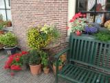 Kleurige 'Hofjes'-bloemen