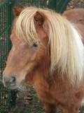 Pony bij terras Johanna's Hof