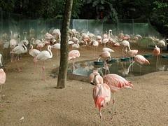 ... roze en witte flamingo's ...