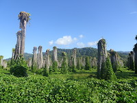 more beautiful scenery in Costa Rica