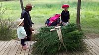Thibetaanse vrouw verzamelt eten voor de Yaks