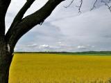 het gouden graan