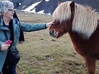 IJslandspaardje