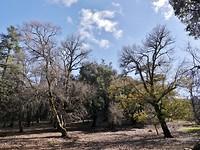 240. De cederhout bossen