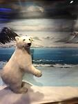 museum ijsbeer Polaria museum
