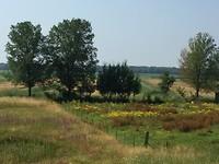 Bloemrijke graslanden!