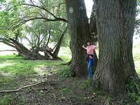 Hele grote bomen!