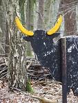 El Toro in het bos! Ongewoon?
