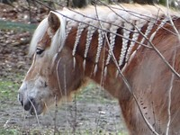 Pony met rasta! Ongewoon?