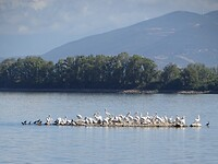 Eilandje met pelikanen!