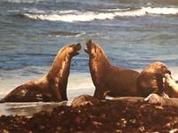Vechtende zeehonden