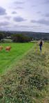 vader en die koe