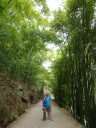 Bamboo-bos in Pingle