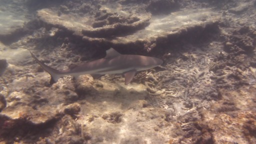 Ja, ja de 1e haaien die we hebben gespot!