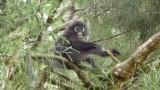 Geweldige aapjes