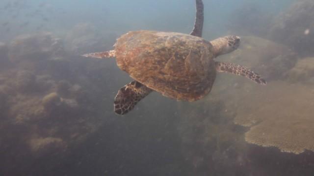 De 1e schildpad die we zagen met snorkelen