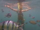 Er zwommen onderwater soms tientallen vissen om ons heen!