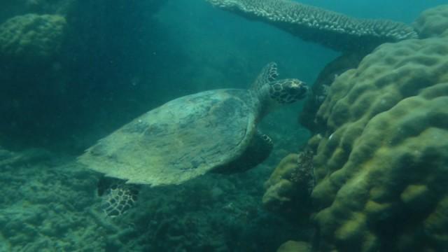 Schildpad die Ramon met duiken zag