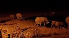 De olifanten s avonds laat bij de waterplaats