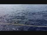 de walvissen
