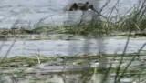 De Oklavanga delta