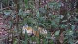 De hike door het bos
