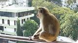 Brutale apen