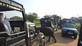 Olifanten oversteekplaats Yala NP