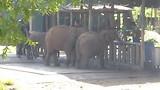 Olifanten op een rij