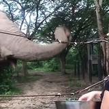 De eerste werkdag met de olifanten in Cha Am