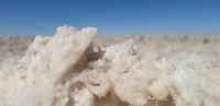 Wit korreltje zout