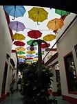 Samen met u onder de paraplu