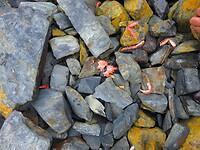 Krabbenresten