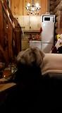 Rendier (gekkigheid) in het huisje
