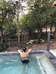 Een koedoe aan ons zwembad