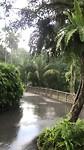 Regenbui in Botanic Gardens