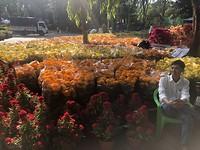 Bloemen en plantenmarkt voor Tet