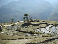 Terrassen in Ghandruk