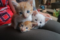 Kattenlove